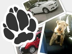 Koiranomistajan autot